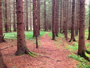 skogen heby